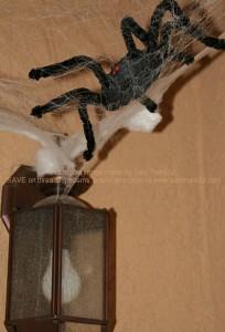 SpiderInvasion1
